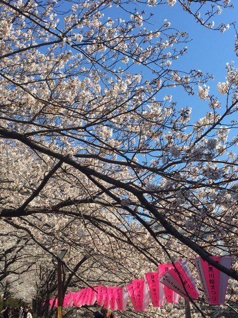 桜、そして思うこと
